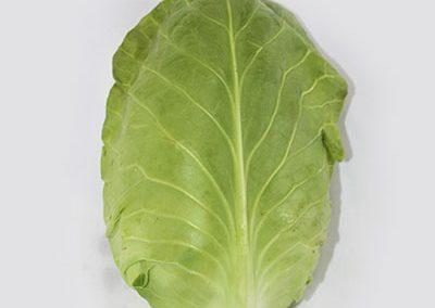 Cabbage Hispi