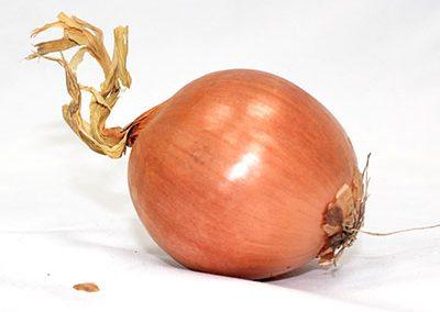 Onion Dutch - medium