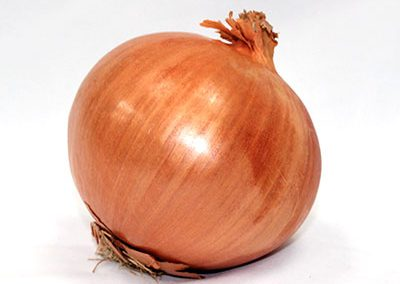 Onion Spanish